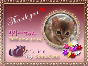 リリーちゃんのサンクスカード