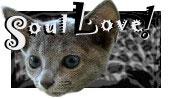 RussianblueCats Soul Love!