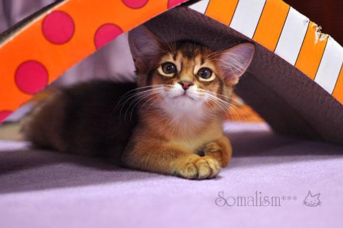 確信犯の子猫
