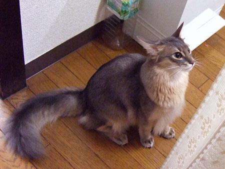 イカ耳のリノ