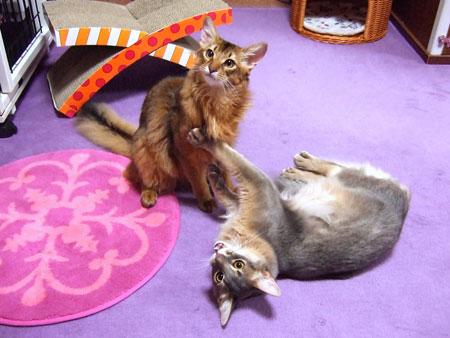 仲良し兄妹猫