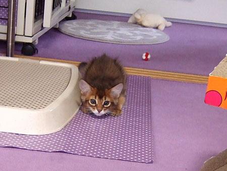 抱っこ猫初心者