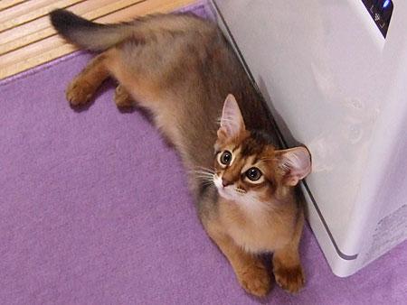 子猫のレアル