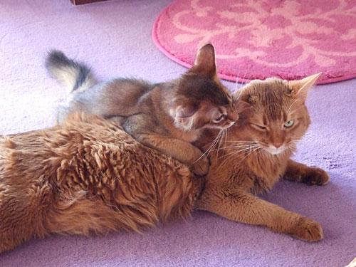 姉に甘える子猫レアル