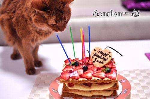 ソマリ ルナ バースデーケーキ