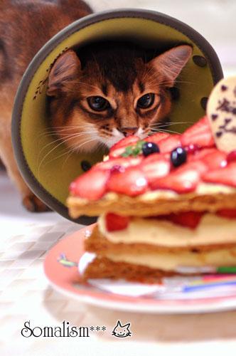 ソマリ レアル ケーキ