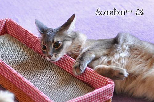 ソマリ リノ