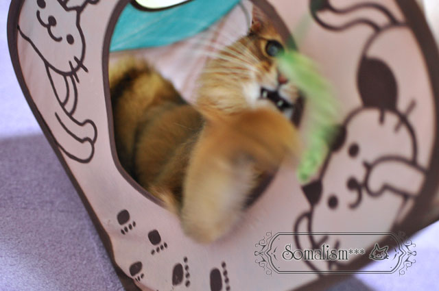 ソマリ 猫 れある