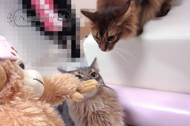 ソマリ 猫 ぬいぐるみ