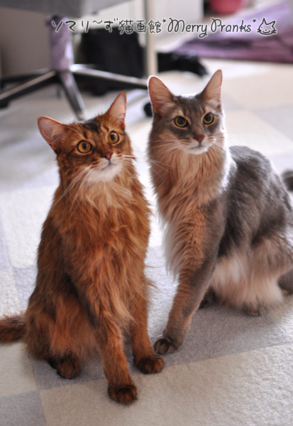 ソマリのリノとレアル