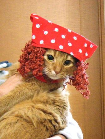ソマリの子猫ルナ