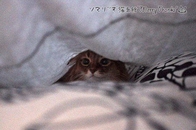 ベッドにもぐるソマリ