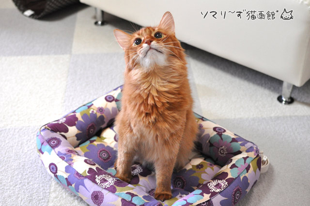ソマリと猫用ベッド