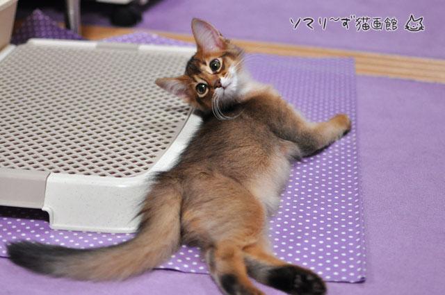 ひよこ毛の子猫