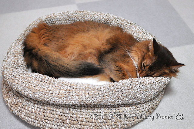 寝るソマリ猫