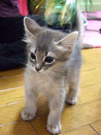 リノ子猫時代
