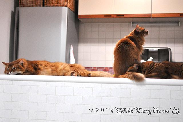 ウエットご飯を待つ猫ず