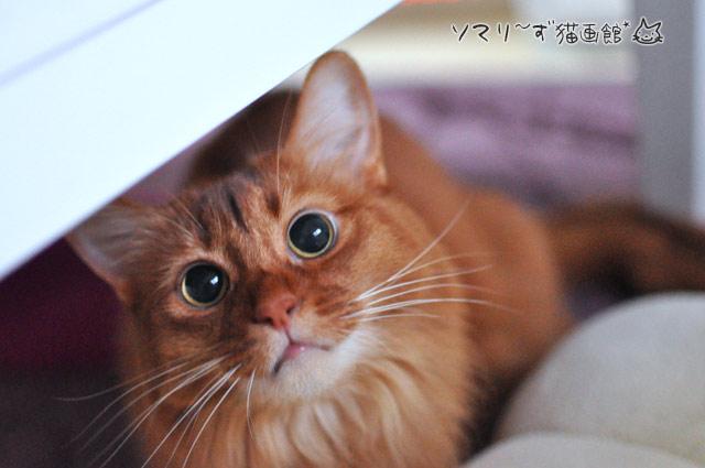 お目目くりくり猫