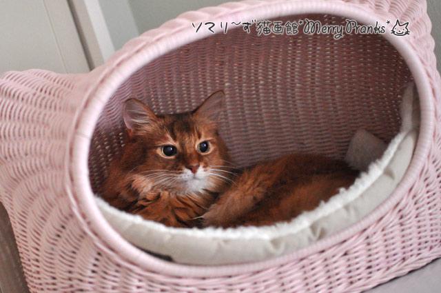 ネコイエに寝るソマリ