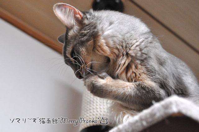 高笑いの猫