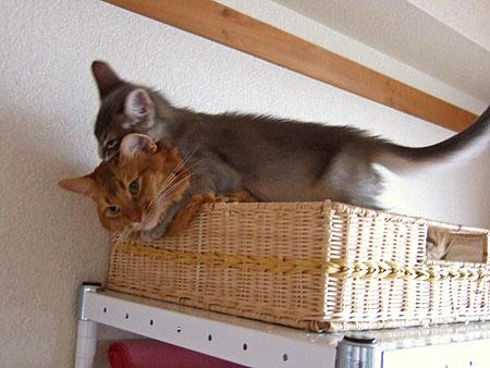 しつこい子猫