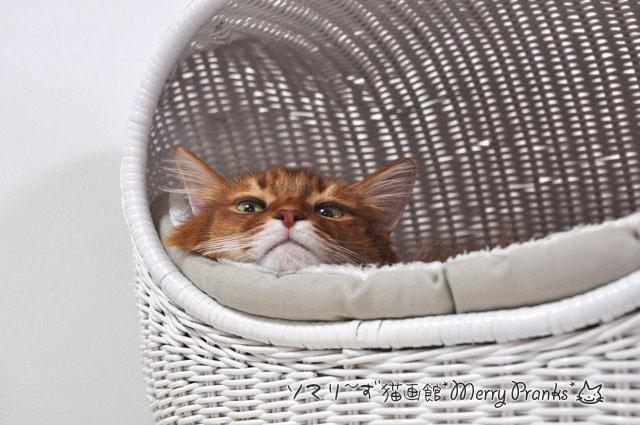 シビアな猫心