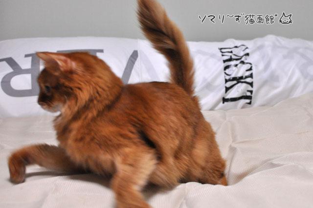 左へ猫ジャンプ