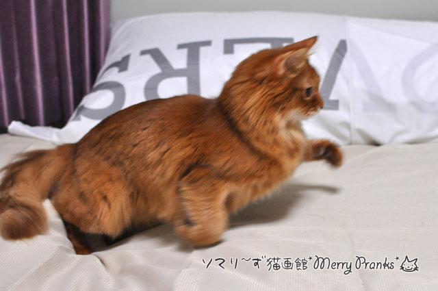 右へ猫ジャンプ