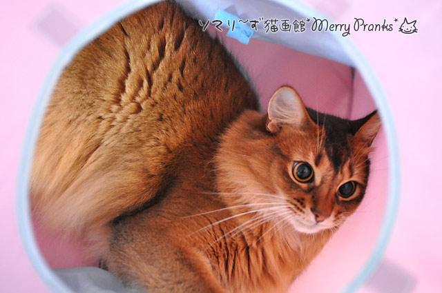 猫トンネルの中のレアル