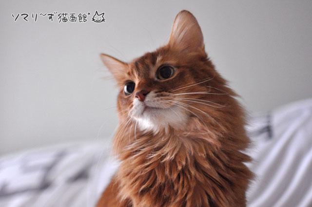 日本語のわかる猫