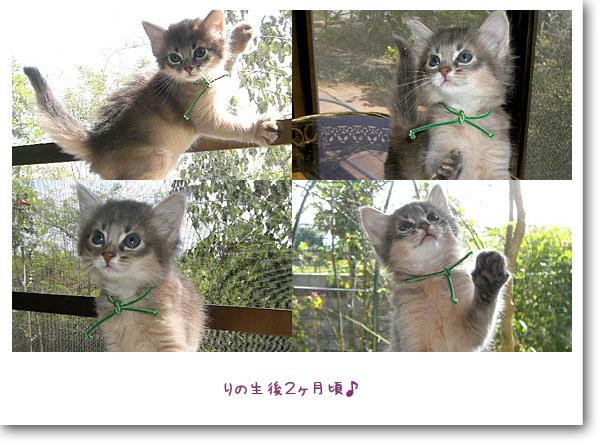 子猫時代2