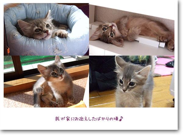 子猫時代3
