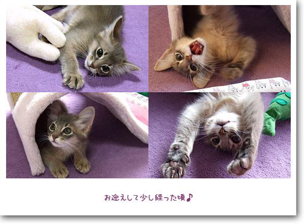 子猫時代4