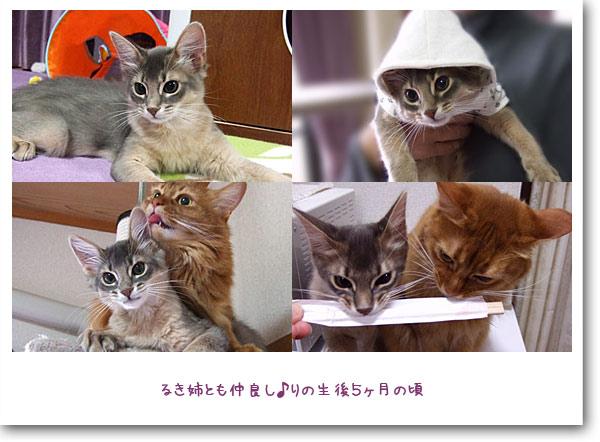 子猫時代5