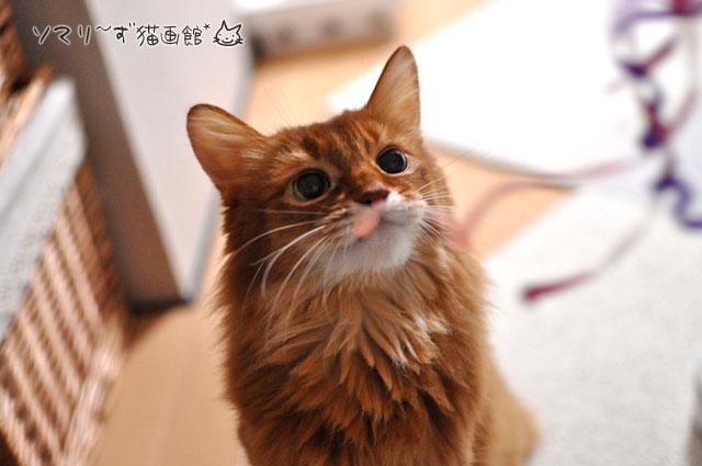 猫じゃらとラピ