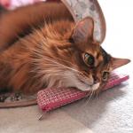 ペンケース枕