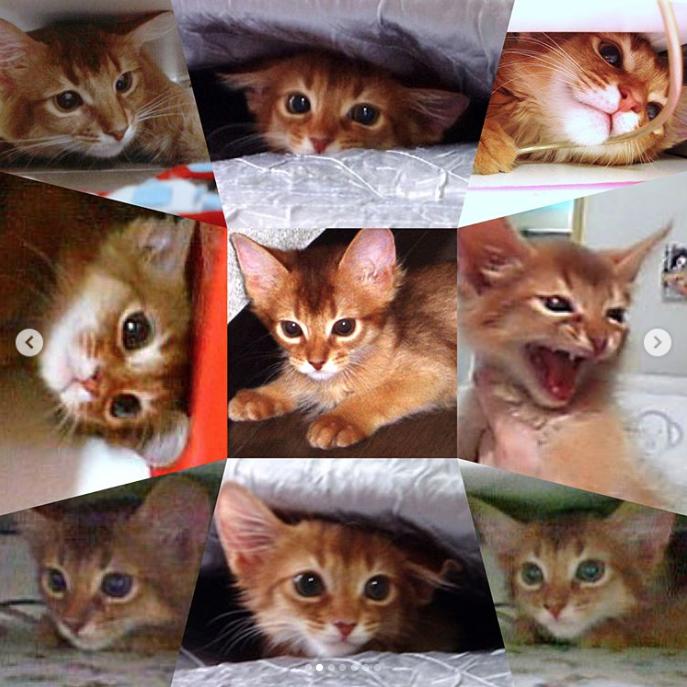 ラピ隊長子猫時代