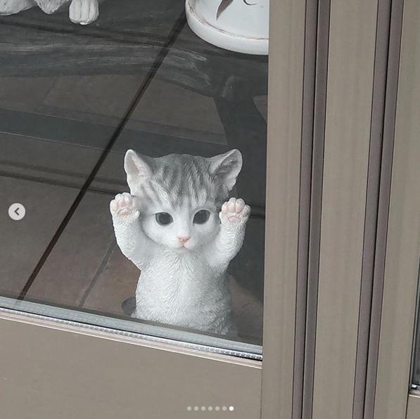 ラウラに似た子猫