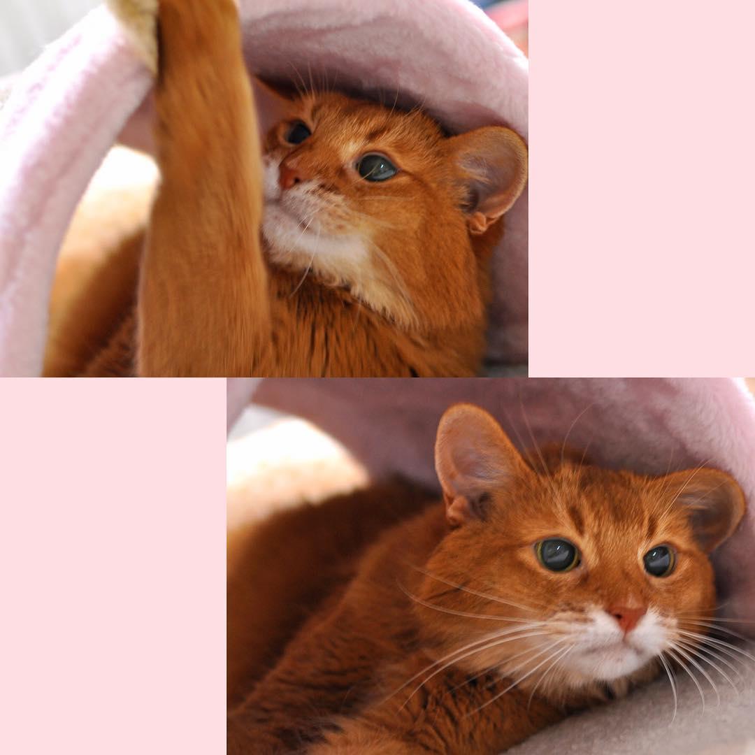 成猫になったルナ