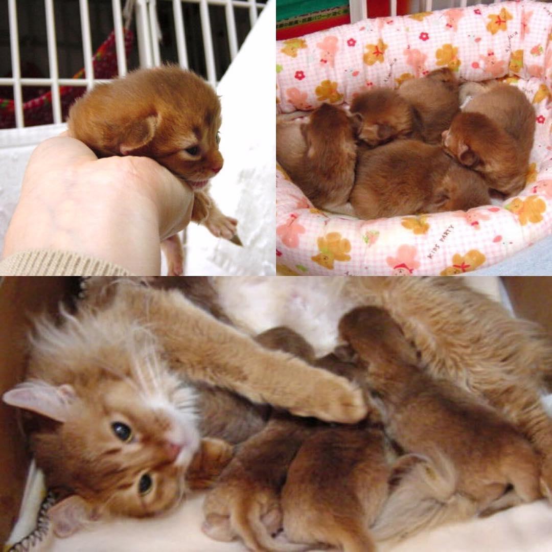 ルナのママ猫と四姉妹にゃん