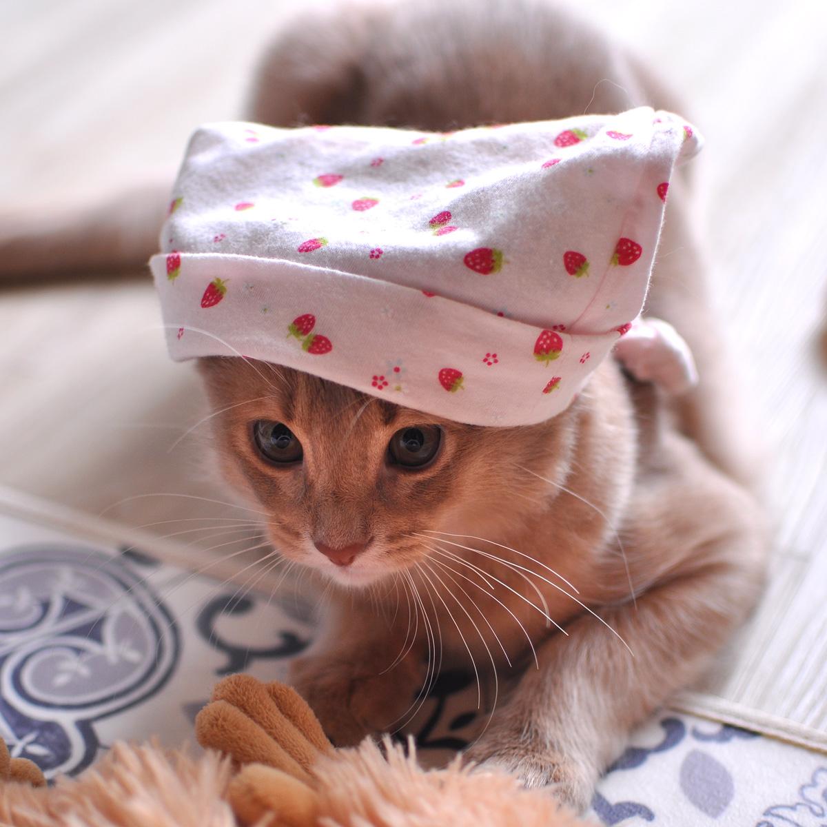 ソマリの子猫3