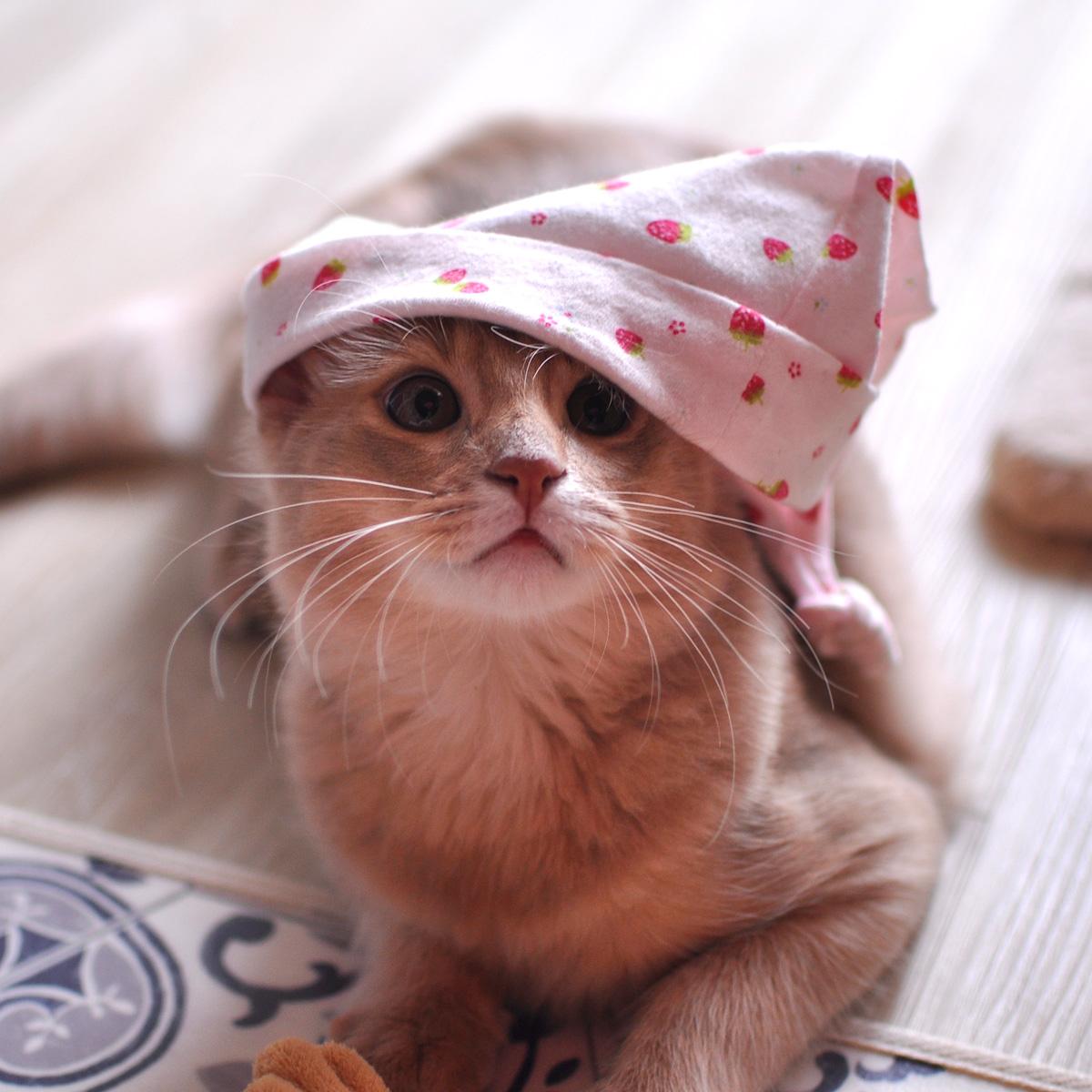 ソマリの子猫ラウラ