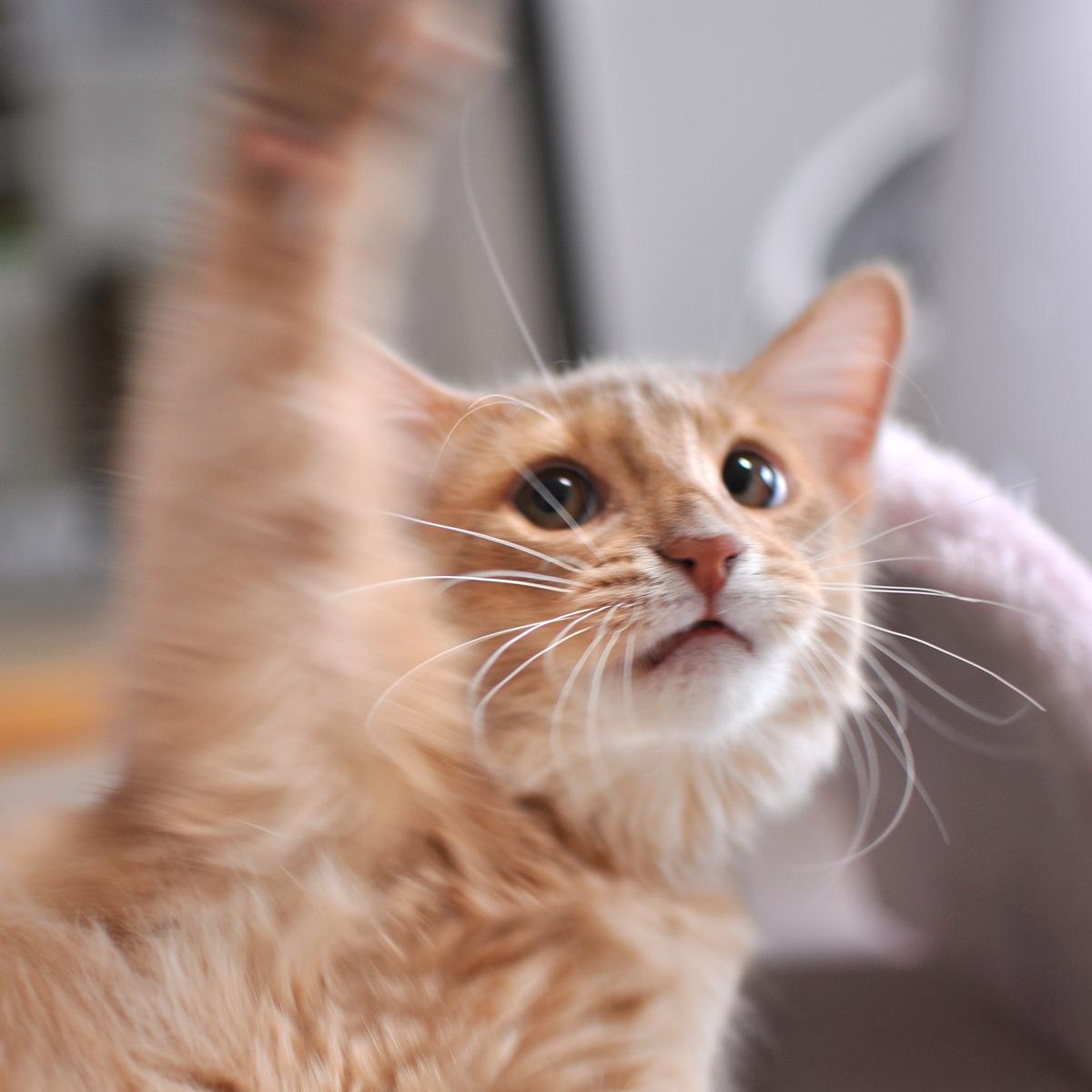 子猫のラウラ4