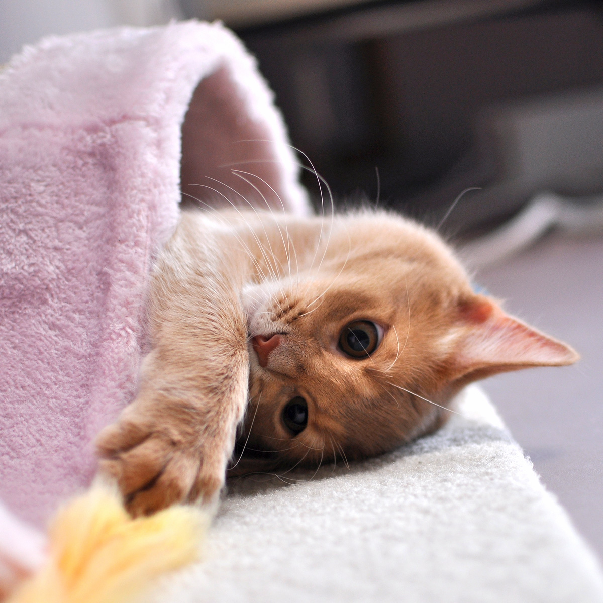 子猫のラウラ3