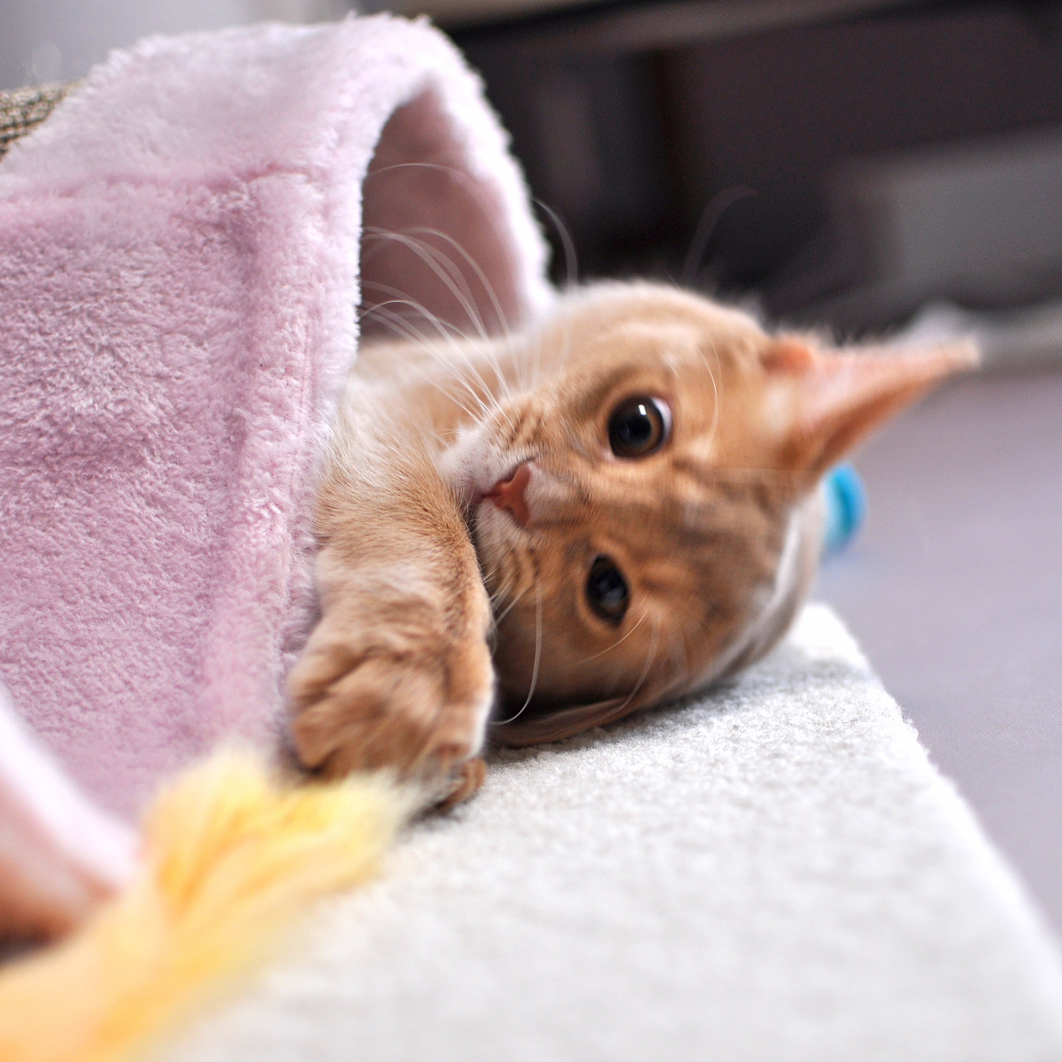 子猫のラウラ2