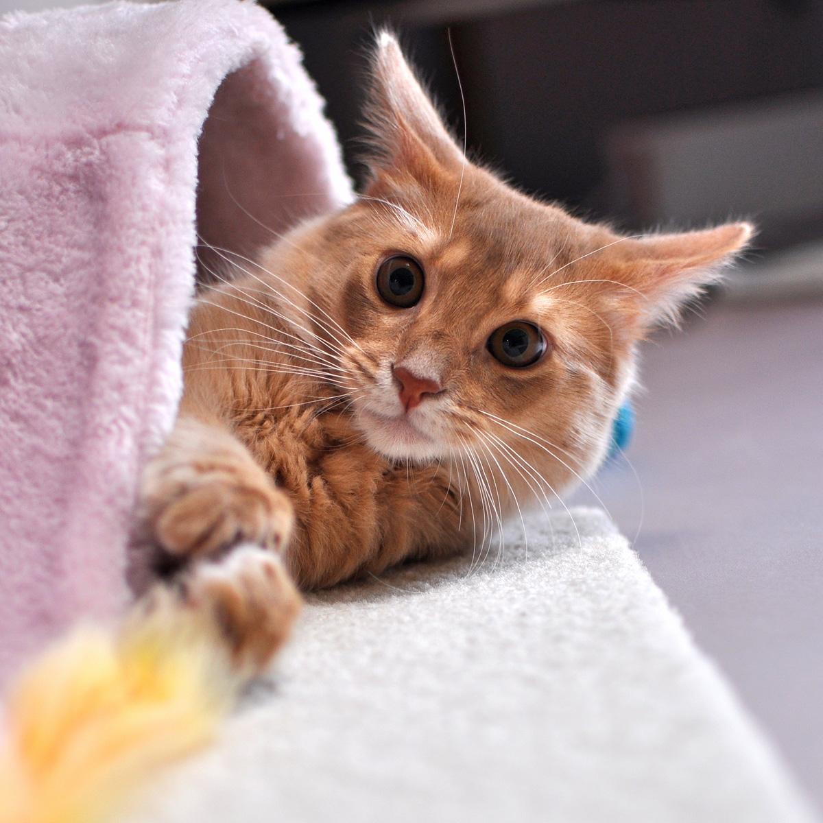 子猫のラウラ1