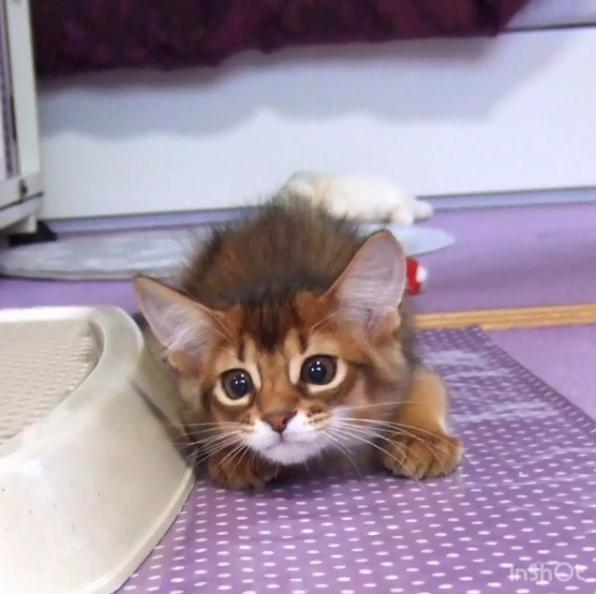 子猫レアル
