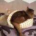 子猫ベッドは誰のもの