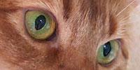 2トーンの目の色
