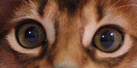 生後4ヶ月頃の目の色